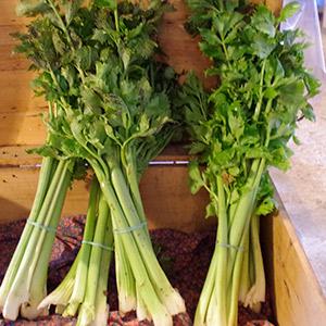 celerie-branche